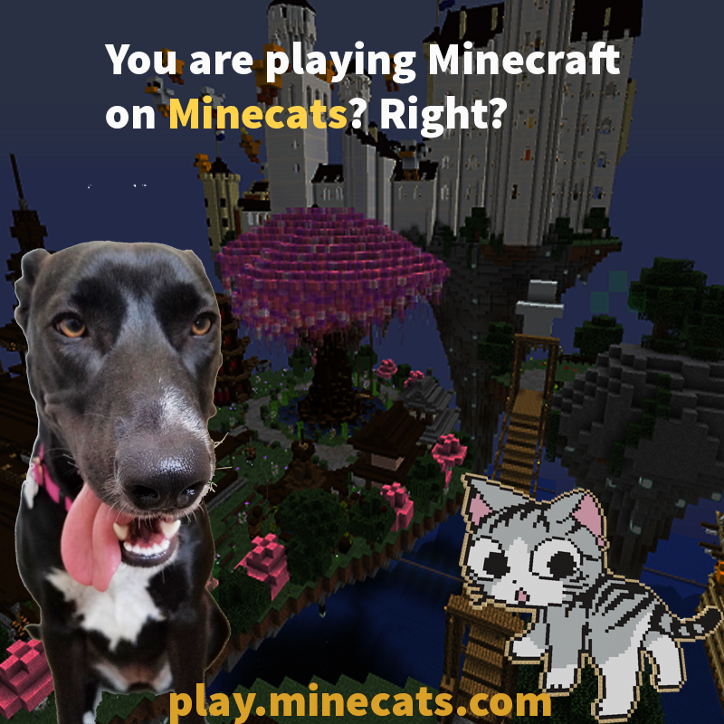 Play on Minecats.com